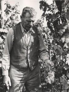 joseph-cattin-in-the-vineyard-225x300.jpg