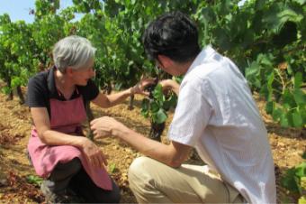 採用サイト(新卒・中途・アルバイト) ワイン通販・専門店 ヴィノス ...